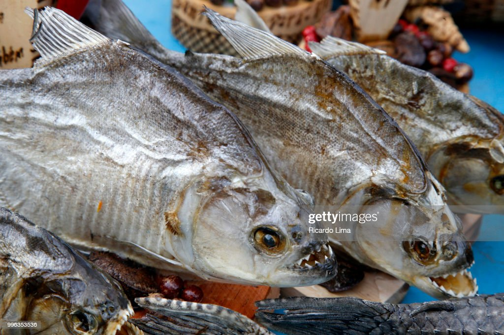 Piranhas Fish Regional Handcraft Exposed For Sale In Fair In