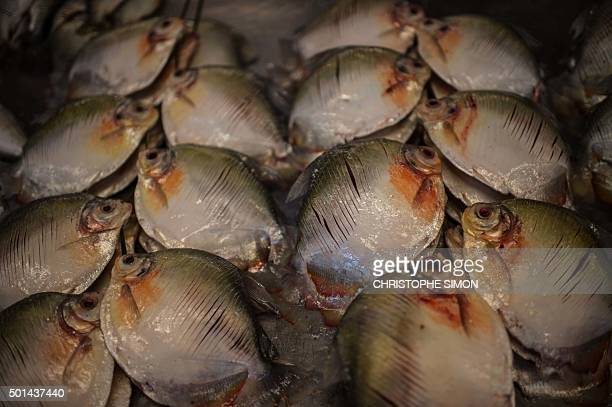 Piranhas for sale at the market of Manaus, on the banks of the Rio Negro river in Amazonia, Brazil on December 11, 2015. AFP PHOTO / Christophe SIMON...