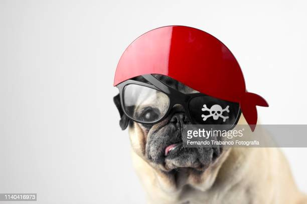 pirate dog - pirate criminal stock pictures, royalty-free photos & images