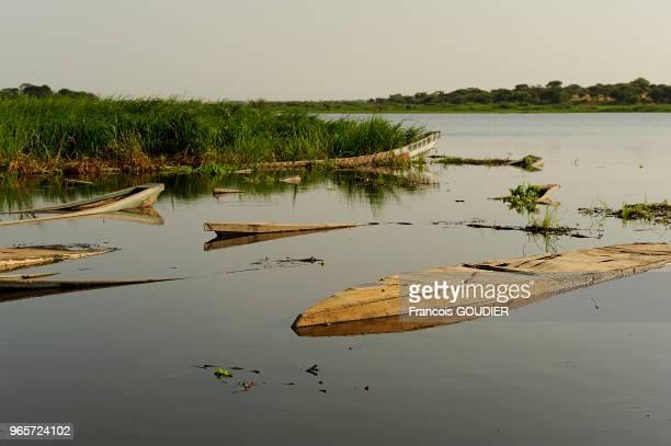 Pirogues à Bol sur le Lac Tchad 26 octobre 2010 Tchad