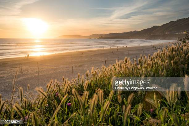 pismo beach at sunset. beach on california's central coast, usa - pismo beach stock pictures, royalty-free photos & images