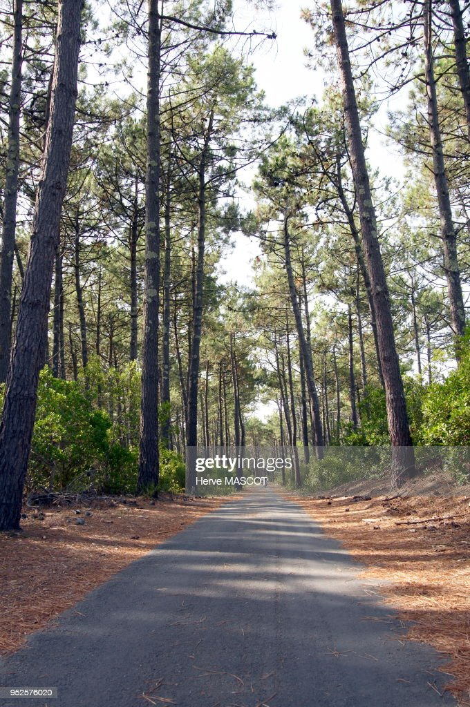 Piste Cyclable Foret Cap Ferret Bassin D Arcachon Aquitaine News Photo Getty Images