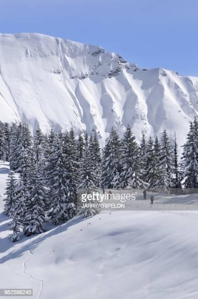 Piste de liaison du secteur Rochebrune Domaine skiable de la station de ski de Megeve Pays du Mont Blanc et Val d Arly departement HauteSavoie region...