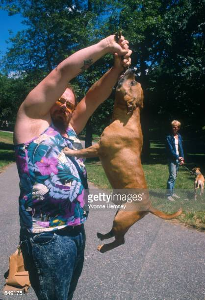A pit bull hangs in midair with it's mouth clenched on a stick July 14 1987 in New York City Pit Bull dogs and their owners make up a special...