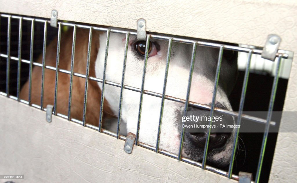 Five arrested in dog fighting raid : News Photo
