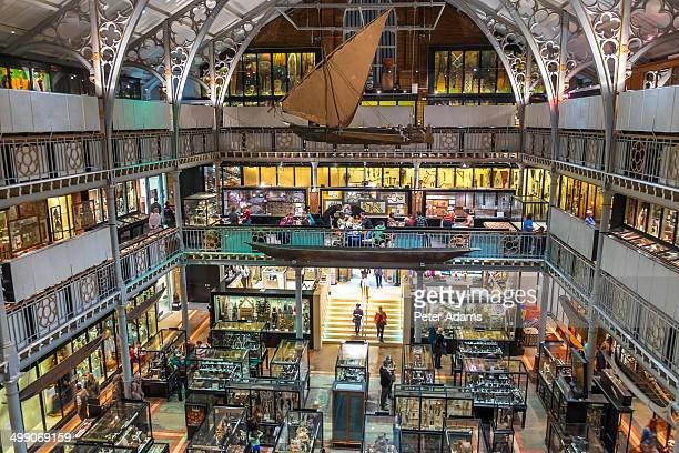 pitt rivers museum, oxford, oxfordshire, england - museum stock pictures, royalty-free photos & images