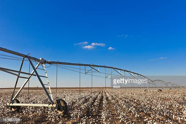 pivot circle irrigation equipment in cotton field - lubbock stock pictures, royalty-free photos & images