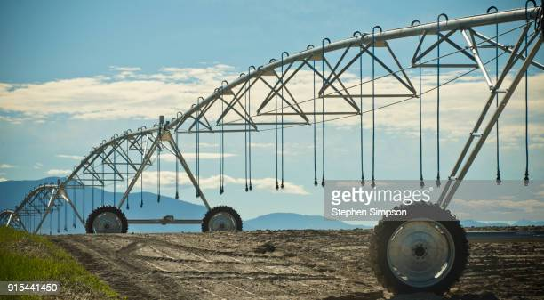 pivot irrigation system in wheat field - irrigation equipment stock pictures, royalty-free photos & images