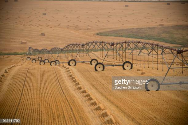 Pivot irrigation system sits in wheat field