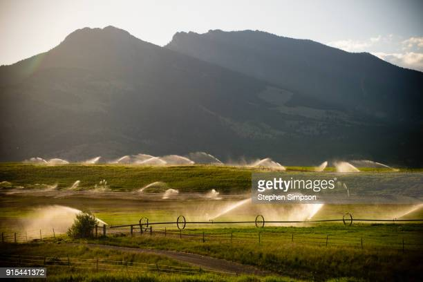 Pivot irrigation system spraying on wheat field