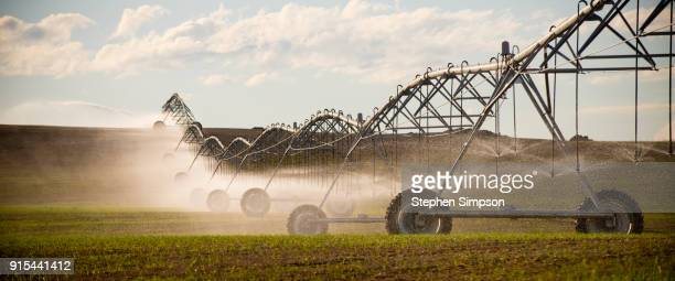 Pivot irrigation system spraying water on crops growing in wheat field