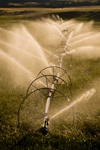 Pivot irrigation system spraying water on crops in wheat field - gettyimageskorea
