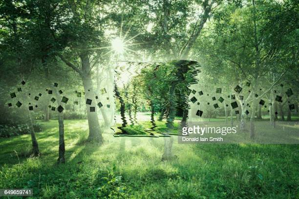 pixelated image of trees in sunny forest - パーマーストンノース ストックフォトと画像