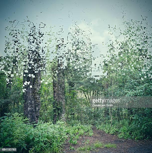 Pixelated woodland