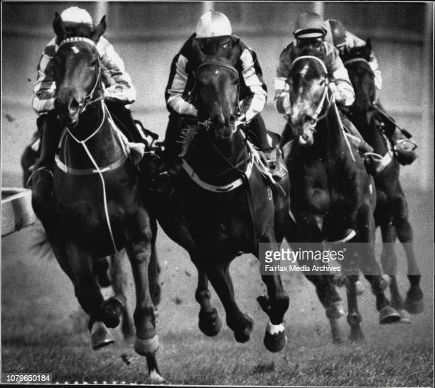 Pixs taken at the Two year old barrier trials held at Canterbury Racehorse Race 8 1st Apollo Bisc 2nd Kuringa 3rd Kingdom pic taken as the come round...