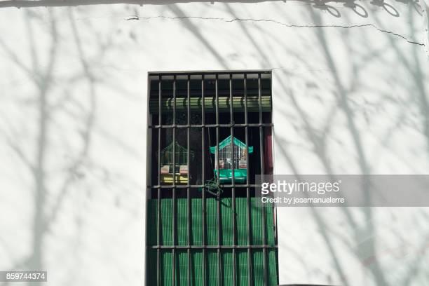 pájaro encarcelado - josemanuelerre fotografías e imágenes de stock