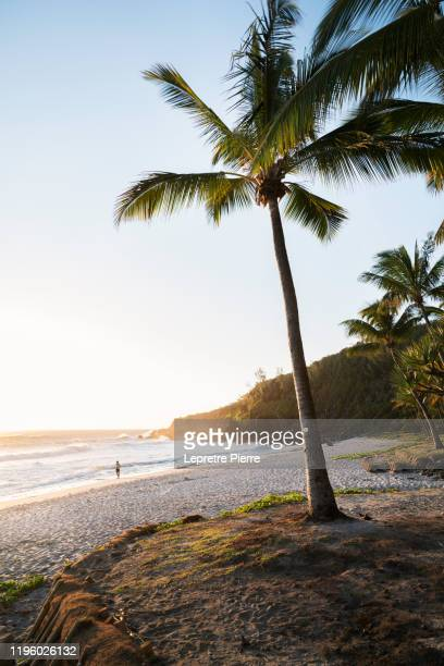 plage de grande anse au coucher de soleil - ile de la réunion - indian ocean stock pictures, royalty-free photos & images
