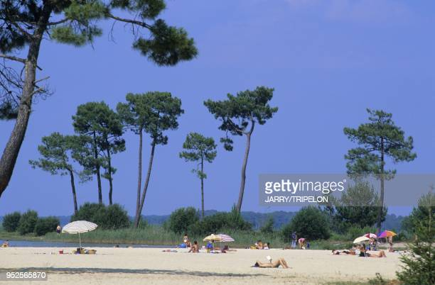 Plage de sable du lac de Biscarosse Foret des Landes essence de pins maritimes Departement des Landes region Aquitaine France