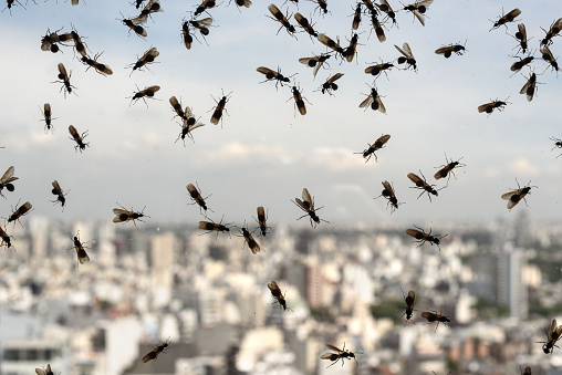 Plague of ants 962722760
