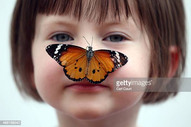 Plain Tiger butterfly sits on the nose of a girl during a photocall to highlight the forthcoming 'Sensational Butterflies' exhibition at the Natural...