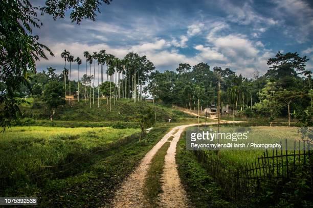plains of kaziranga, assam, india - kaziranga national park stock pictures, royalty-free photos & images