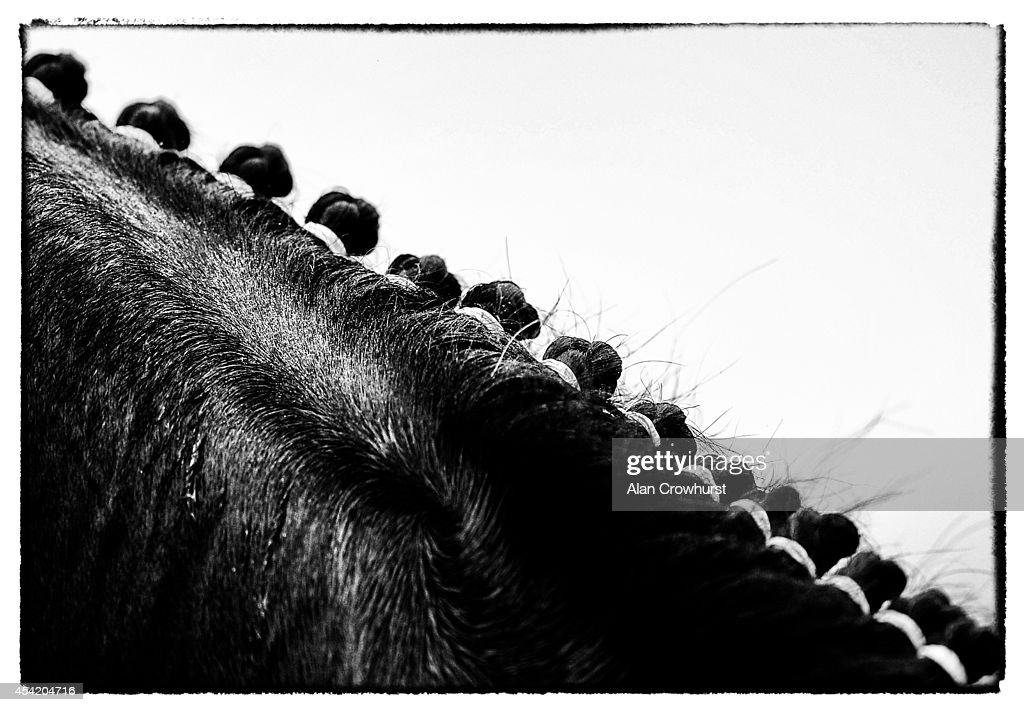 A plaited mane on a horse at Epsom racecourse on August 26, 2014 in Epsom, England.