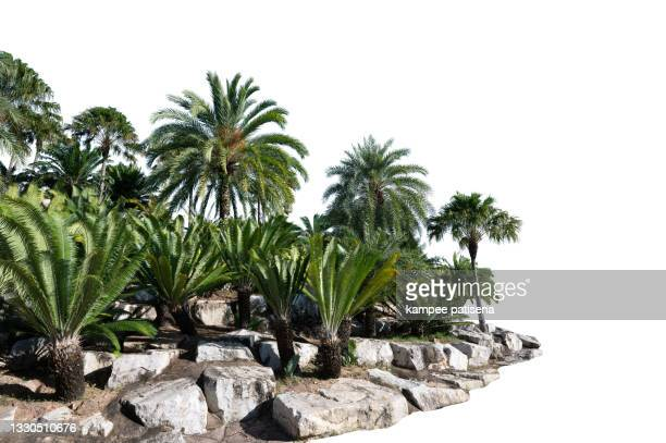 plam tree and rock garden - non urban scene stock pictures, royalty-free photos & images