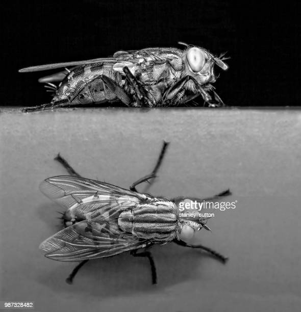 plan & elevation - tsetse fly stock pictures, royalty-free photos & images