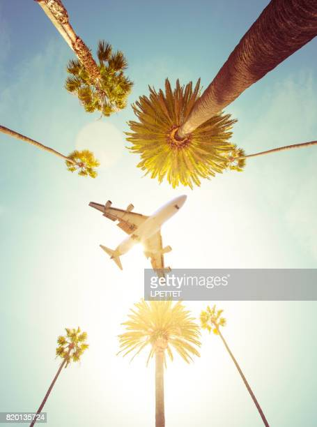plane over palm trees - hollywood california stock pictures, royalty-free photos & images