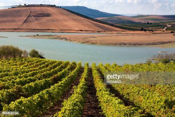 Planeta wineries Sambuca di Sicilia Wine Estate dell'Ulmo Sicily Italy Europe