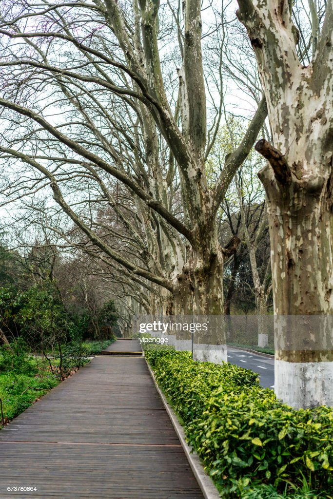 plank walkway along driveway in early springtime stock photo getty
