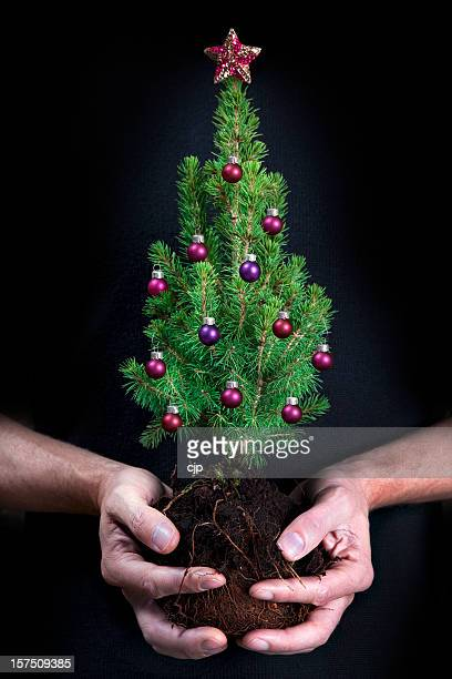 plant a tree this christmas - bonsai tree stock pictures, royalty-free photos & images