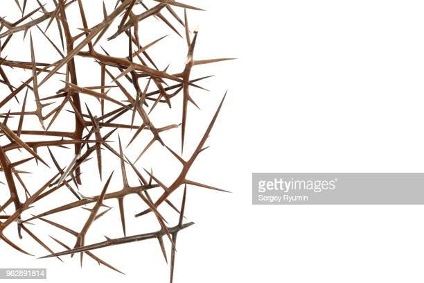 plant abstract background - thorn stock pictures, royalty-free photos & images