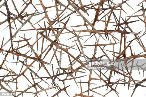 plant abstract background - branch plant part stock pictures, royalty-free photos & images