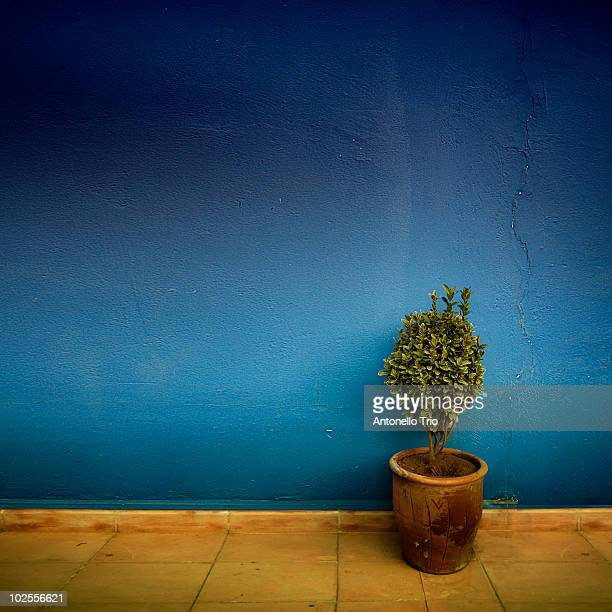 plant against blue wall - navy blue stock pictures, royalty-free photos & images