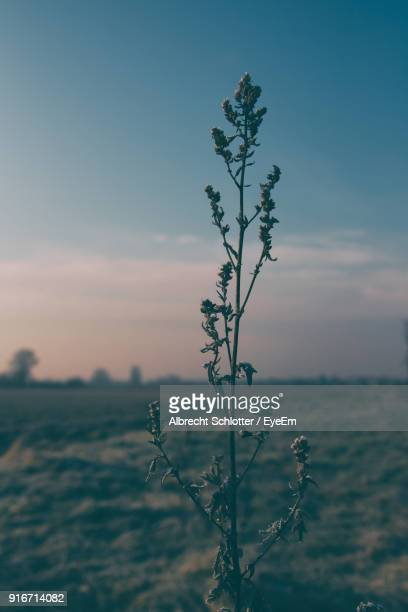 plant against sky at sunset - albrecht schlotter foto e immagini stock
