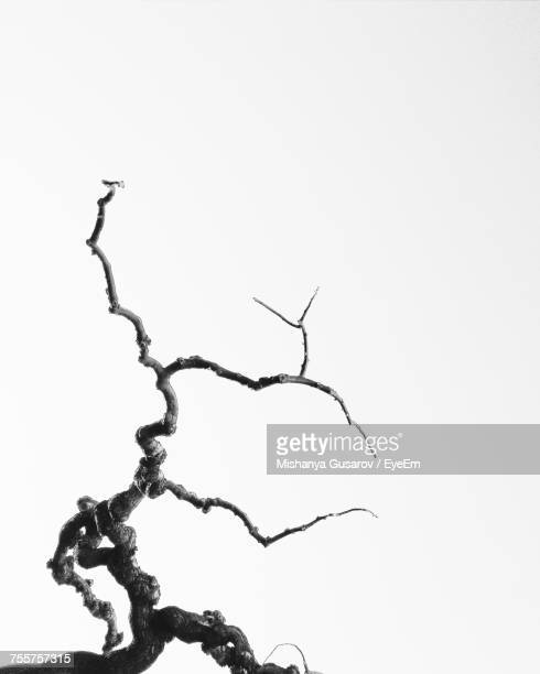 plant against white background - bare tree stock pictures, royalty-free photos & images