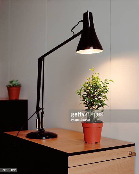 Plant and desk lamp in office