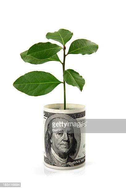Plant and dollar bill