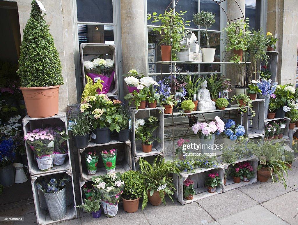 Plant and flower shop display on Pulteney Bridge, Bath, Somerset ...