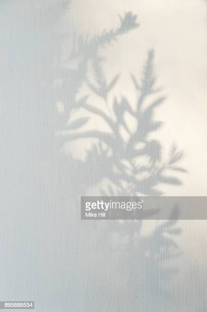 plant and shrub shadow - ombra in primo piano foto e immagini stock
