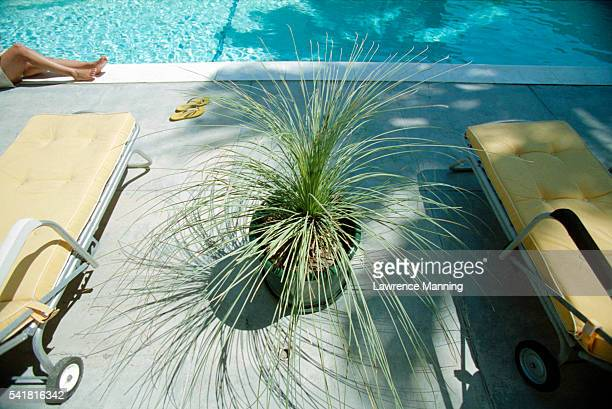 Plant Between Pool Chairs