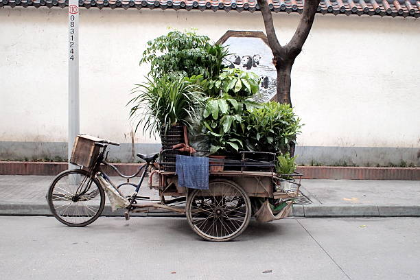 Plant Bicycle-Shop