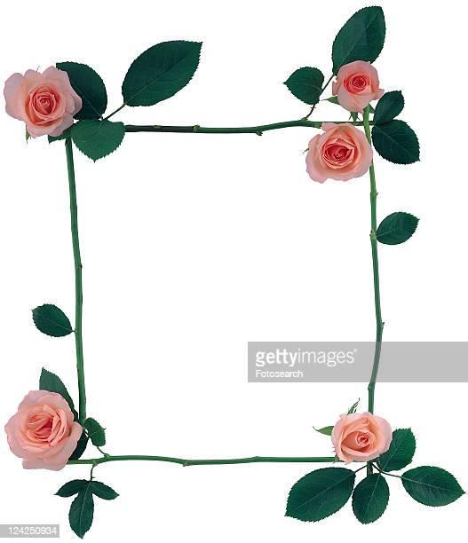 plant, border, nature, frame, background, square