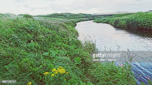 plant by river - county antrim stock pictures, royalty-free photos & images