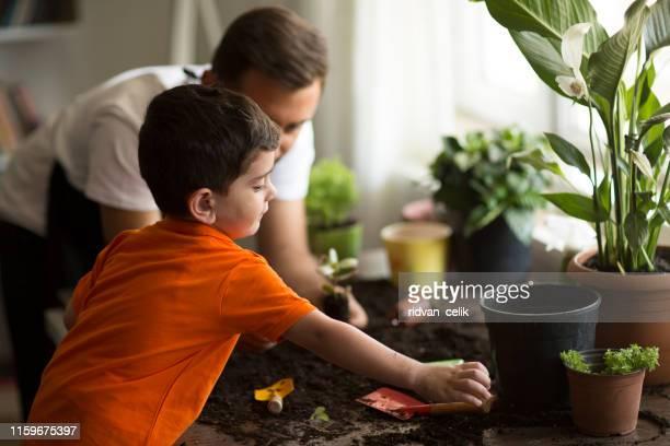 pflanzenpflegezeit - genderblend stock-fotos und bilder