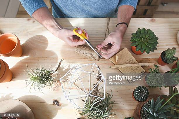 Plant collector preparing the pendant for an air plant