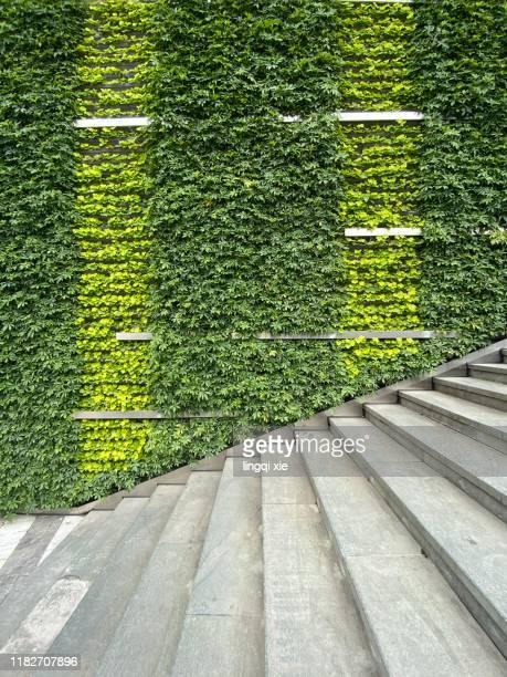 plant covered wall and stairs - grün stock-fotos und bilder