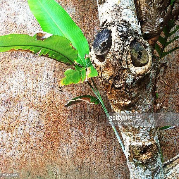Plant Emerging From Tree Trunk