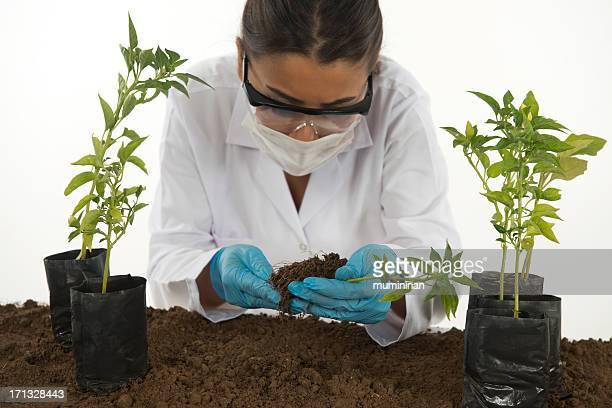 plant experiment